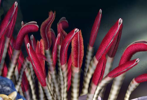 Giant tube worms