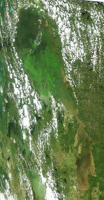 Lake Winnipeg algae bloom, August 11, 2011 (From Lake Winnipeg Research Consortium)