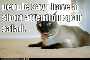 funny-cat-pictures-people-say-i-have-a-short-attention-span-salad