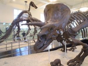 Triceratops and Duck-Billed dinosaurs