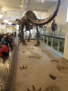 Apatosaurus. Check out the people for scale. It's huge!!
