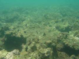 Sediment and algal overgrowth have overtaken this once-healthy reef. (Courtesy Emre Turak/Australian Institute of Marine Science)