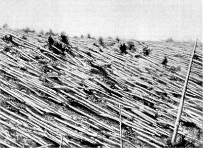 Trees after the 1908 Tunguska event. Source