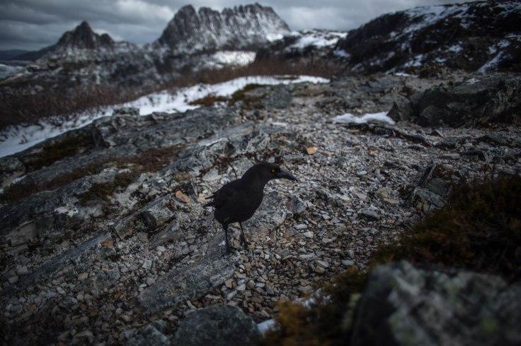 Ilya - Bleak Cradle Mountain.jpg